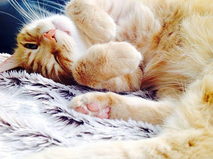 Portrait of cute ginger cat lying on rug