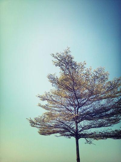 Enjoying Life Flowers#nature#hangingout#takingphotos#colors#hello Worldflorafauna F Sunset #sun #clouds #skylovers #sky #nature #beautifulinnature #naturalbeauty #photography #landscape