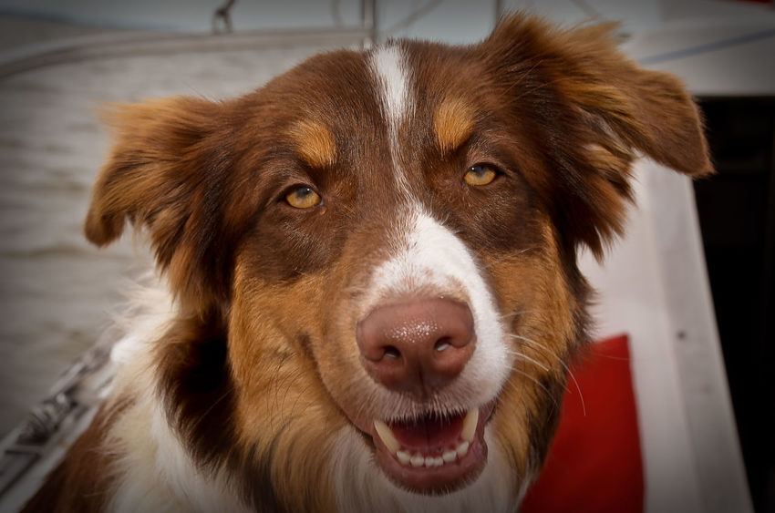 Animal Head  Animal Nose Close-up Derp Dog Doggy Domestic Animals Pets Portrait Snout