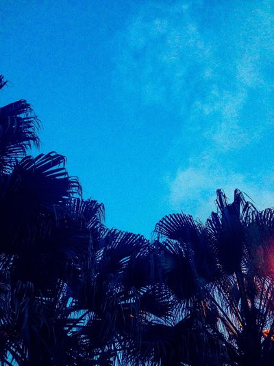 You Name It Blue No People Nature Low Angle View Palm Tree Beauty In Nature Sky UnderSea Tree Underwater Night Outdoors Close-up