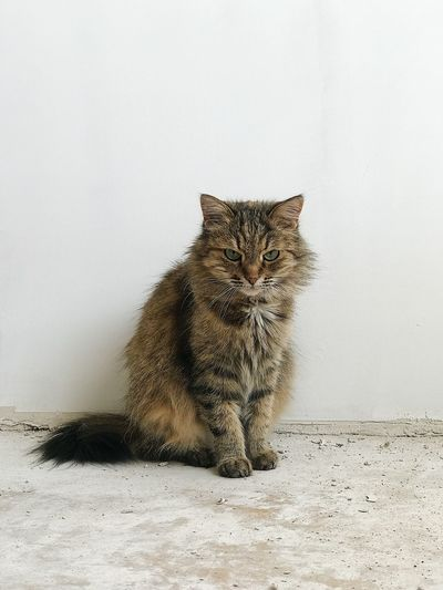Portrait of cat sitting against wall