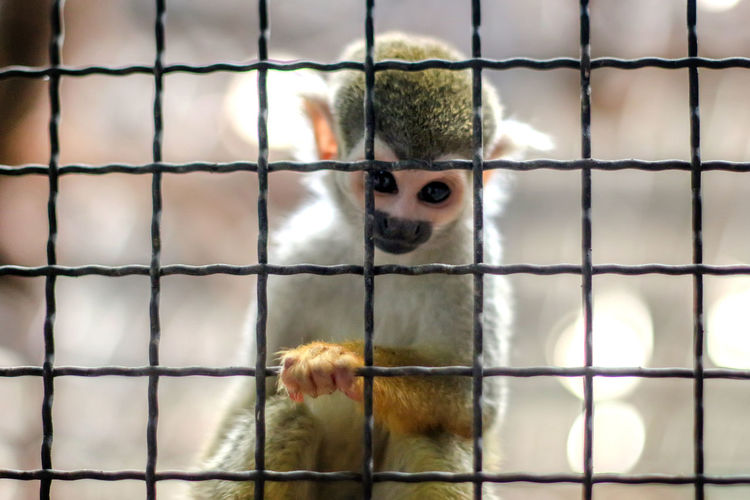 Small yellow leg monkey on tree in zoo cage. wild life animal concept