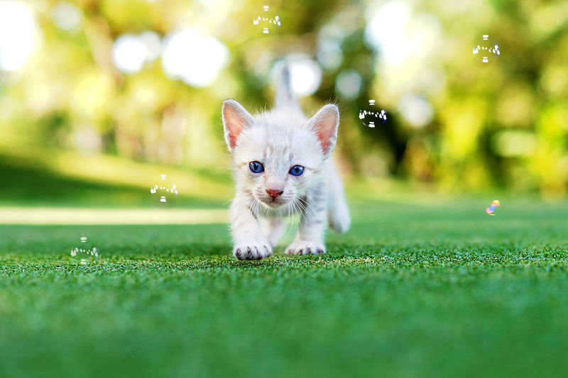 Portrait of kitten playing with bubbles on grass