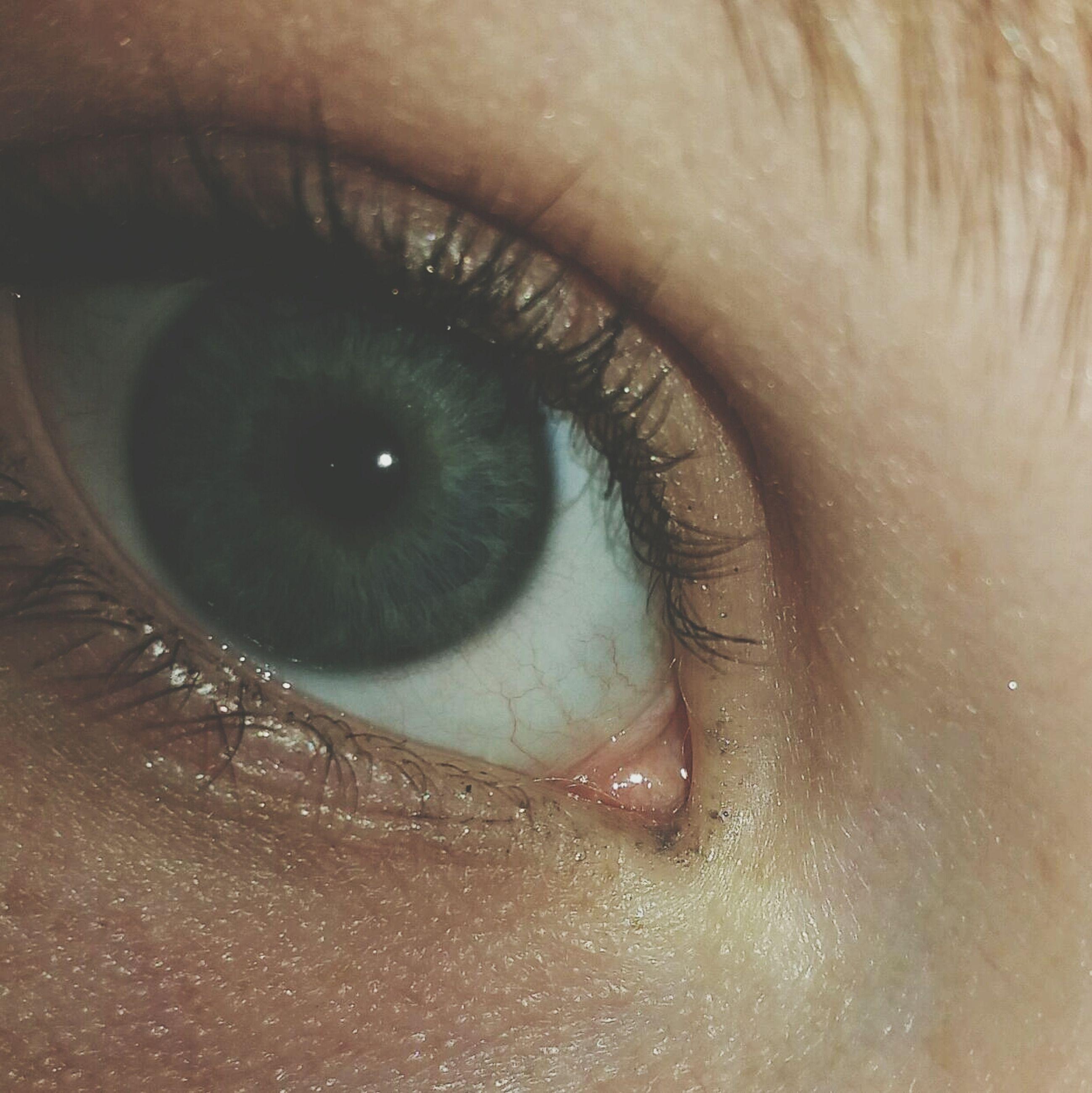 human eye, close-up, part of, eyelash, eyesight, human skin, person, sensory perception, lifestyles, unrecognizable person, extreme close-up, cropped, eyeball, human face, indoors, iris - eye