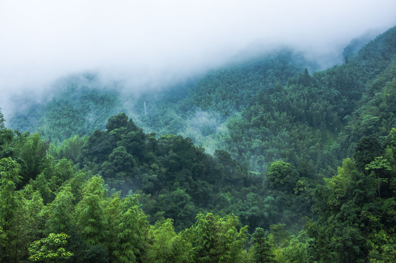 nature, tree, fog, beauty in nature, mountain, scenics, weather, forest, tranquility, tranquil scene, green color, no people, lush foliage, day, foggy, outdoors, mist, mountain range, landscape, growth, sky, hazy, freshness