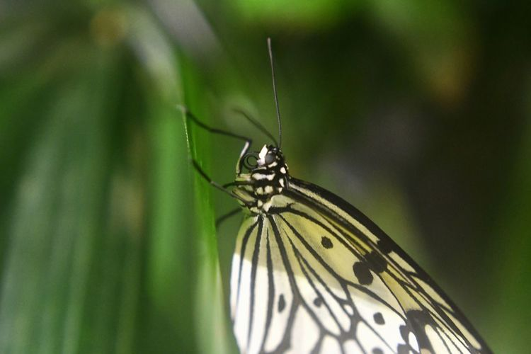 Butterfly 2 Animal Themes Animals In The Wild One Animal Animal Wildlife Nature