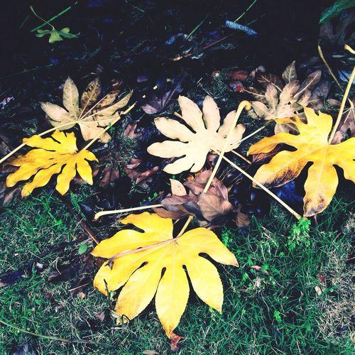 一树苍翠,落一地金黄。 Leaf