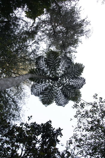 Symetry Symmetrical Symetrical Pattern Nature Patterns In Nature Beauty In Nature Sky Tree No People Tranquility Day