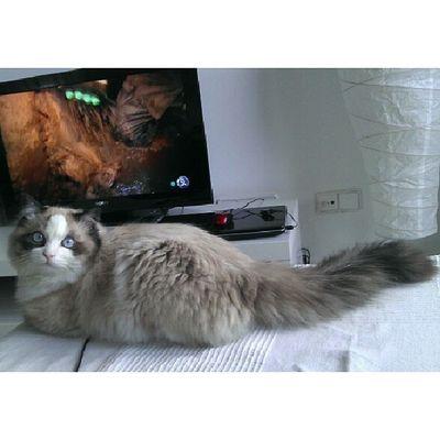 Ggggguapo!!! Srenrique Gato Cat Instacat gatolicismo melocomo bonico guapo