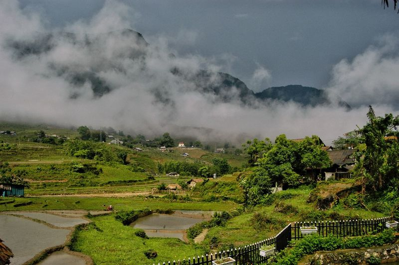 Vietnam SaPa Plant Cloud - Sky Sky Tree Scenics - Nature Landscape Environment Beauty In Nature Nature Growth Land Tranquility Tranquil Scene Field Rural Scene Agriculture No People Crop  Mountain Outdoors