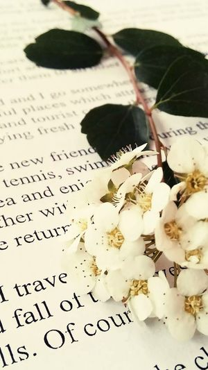 Books ♥ Flowers Perfctpicture🌸