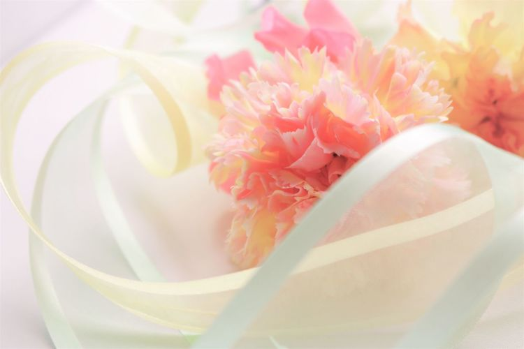 Carnations Beauty In Nature Close-up Day Flower Flower Head Fragility Freshness Growth Indoors  Nature No People Petal Pink Color Plant Ribon