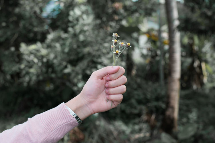 Cropped hand of woman holding flowers against plants