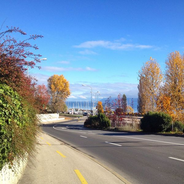 Autumn Autumn Colors Autumn Leaves Blue Clear Sky Day Empty Road Road Road Marking Sky Street Tree Landscapes With WhiteWall
