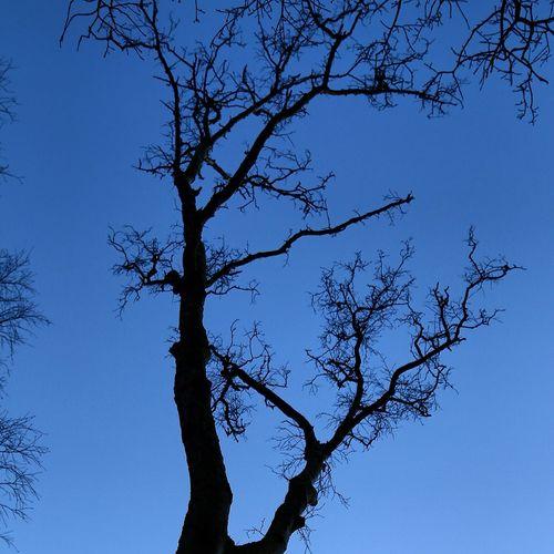 Trees Tree TreePorn Tree_collection  Sky Winter Winter Trees Wintersky Tree And Sky EyeEm Best Shots - Trees