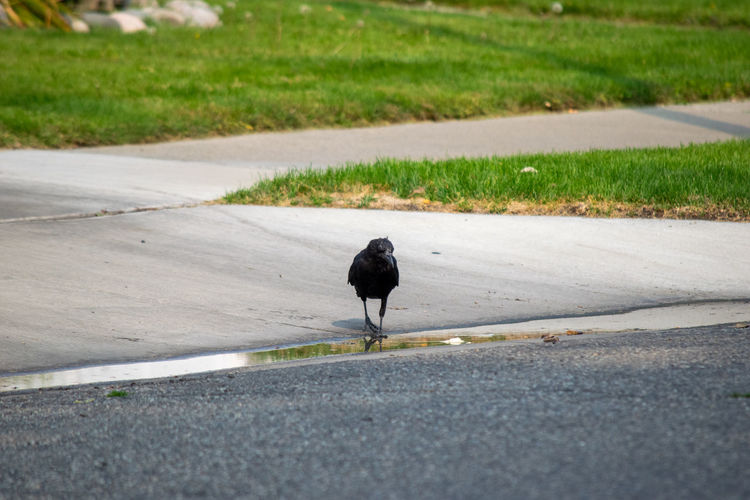View of a bird on road