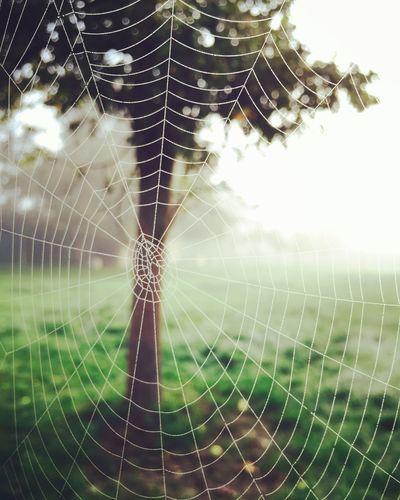 Enjoy nature! Nature Spiderweb Spider Dew First Eyeem Photo
