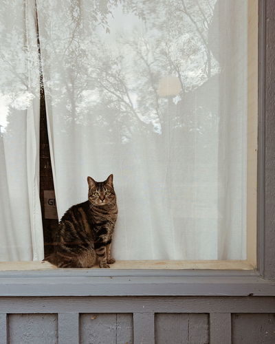 Cat sitting on window sill