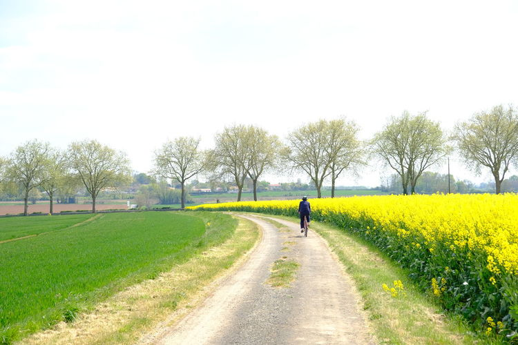 Man cycling on road amidst field against sky