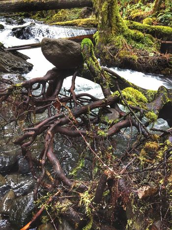 Waterfalls Nature Water Tree Outdoors Stones Abstract Nature Beauty In Nature Layers And Textures Backgrounds Shapes And Forms Textured  Scenics Landscape Tree Roots  TreePorn Abstractions Tree Trunk Moss & Lichen Natural Collages