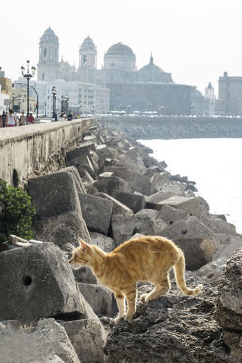Quay of cats in Cadiz. A young homeless red cat on the background of the Atlantic Ocean and the Cathedral in Cadiz Andalucia Spain Andalucía Atlantic Cadiz Cathedral Square City Cityscape Pier SPAIN Travel Animal Built Structure Citylife History Homeless Cat Nature Ocean One Animal Pets Red Cat Summer Travel Destinations Water