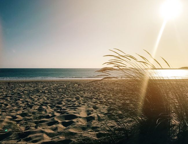 202/365 Sea Water Horizon Over Water Beach Sand Scenics Sunlight Nature Clear Sky Beauty In Nature Sun Sky Tranquility Tranquil Scene Outdoors No People Sunset Day