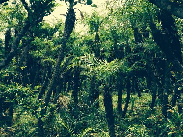 八丈島 植物園