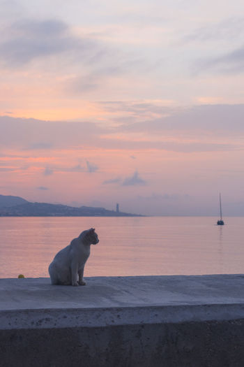 Dog on sea shore against sunset sky