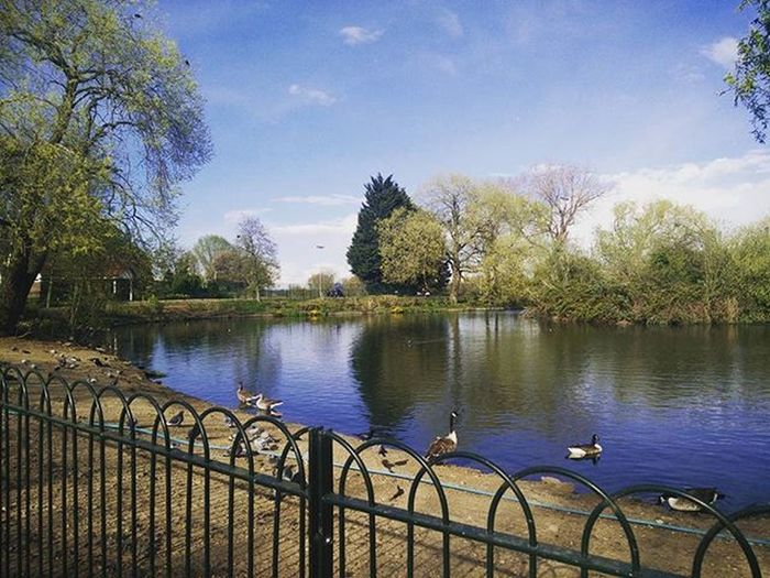 A nice day calls for a stroll in the park 😊🤗🌞 Sunnyday Theyseemestrolling Parklife Picoftheday Beautview HippoAdventures Uk Travelling
