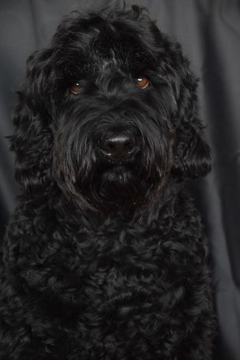 Cutest dog ever❤️ Dog Dogs Pet Mammal