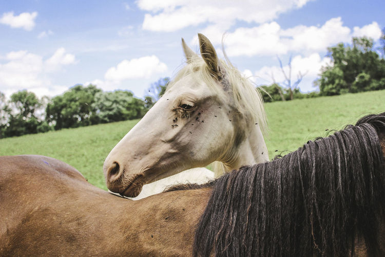 Close-Up Of Horses Standing In Farm