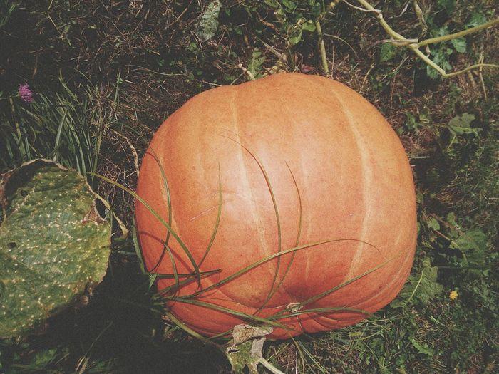Outdoors Day Nature PumpkinPatch🎃 Pumpkin Pumpkin Season Helloween Helloween🎃🎃🎃 Orange Color Autumn Autumn Color Bosnia And Herzegovina EyeEm Nature Lover EyeEm Gallery Eyemphotography Eyeemphoto