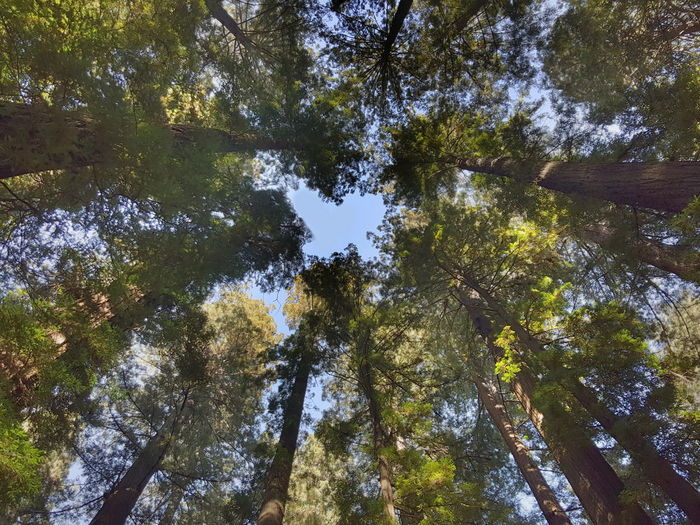 Heart of the forest. Low Angle View Growth Scenics Tranquility Forest Branch Nature Beauty In Nature Tree Trunk Tranquil Scene Tall - High Green Color Green Day Directly Below Tall Non-urban Scene WoodLand Sky Redwoods Redwoods California Humboldt County First Eyeem Photo