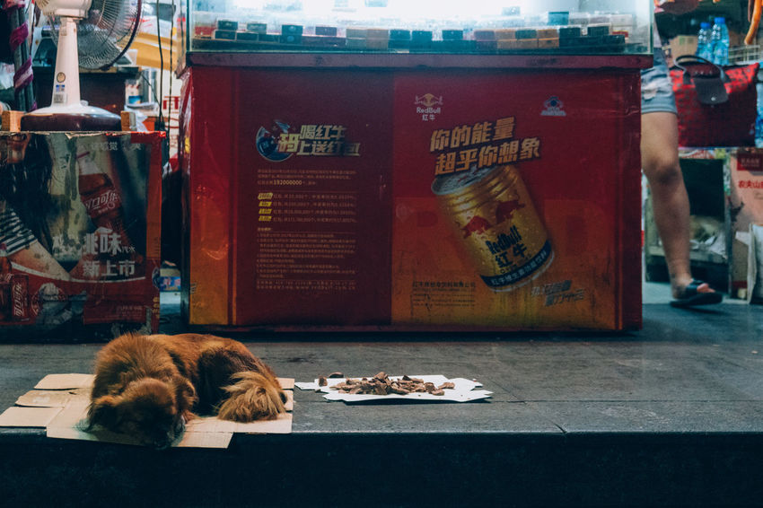 Animal Themes Dog Domestic Animals Mammal Pets Streetphotography