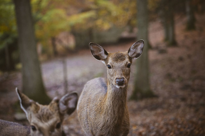 Portrait of deer on field in forest