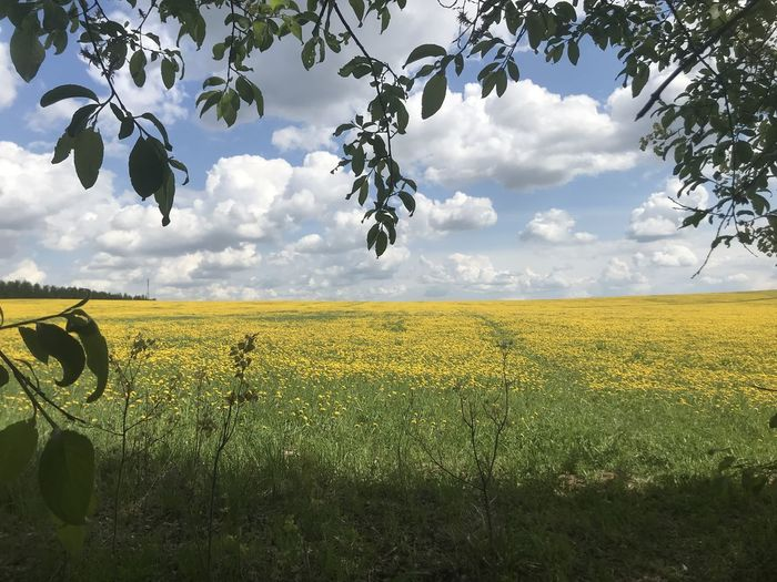 Scenic view of yellow field against sky