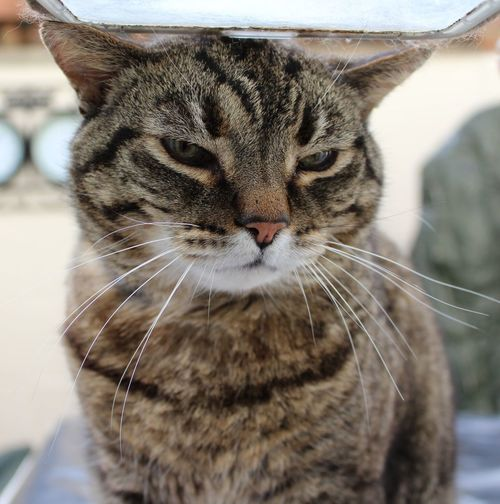 Sad Face Fed Up Kitty Cat Catflap