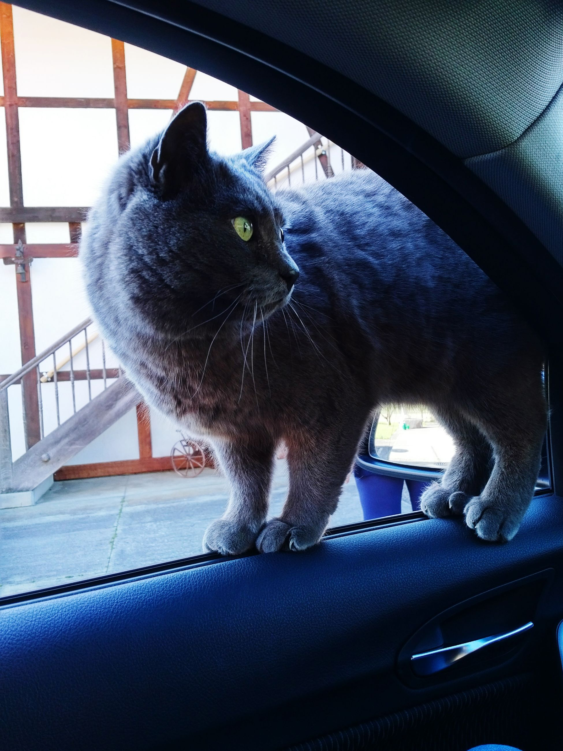 one animal, animal themes, pets, domestic animals, indoors, domestic cat, mammal, transportation, cat, portrait, close-up, mode of transport, car, black color, looking at camera, sitting, built structure, animal head, no people, window