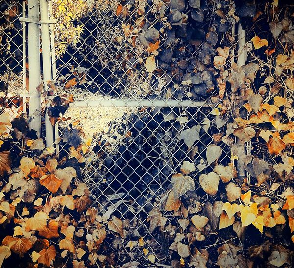 Full Frame Backgrounds No People Textured  Pattern Close-up Day Outdoors Nature Cityscape Gate Gateway Shadows & Lights Warm Colors Drastic Edit Nature Vs City Leaves From My Point Of View Surrealism Artistic Expression Growth Abandoned Places Abandoned Adaptation Nature On Your Doorstep