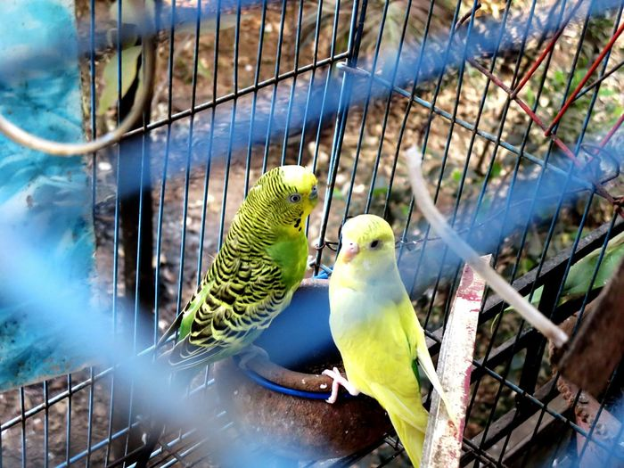 High angle view of parrots in cage
