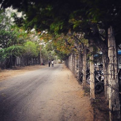 The Green ODF Roads Iith Gate Waiting For The Yellow Bus Nostalgic  Moments Cool Awesome Colors Of Nature Perfect Weather Sunset Evening