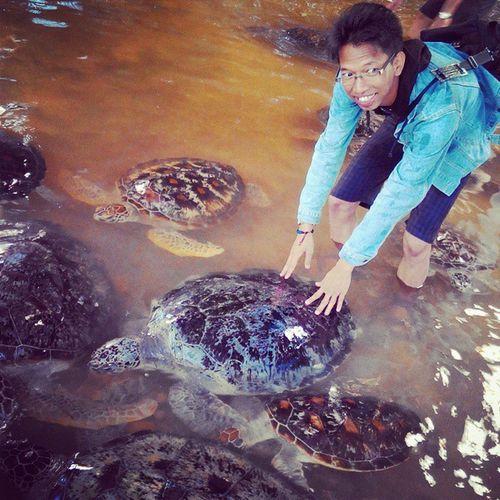 Turtle Tanjungbenoa Bali INDONESIA Animal Saveworld Nature Hunting Love