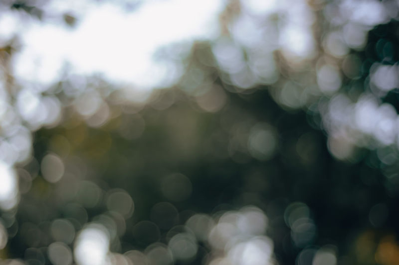 Defocused image of plants on sunny day