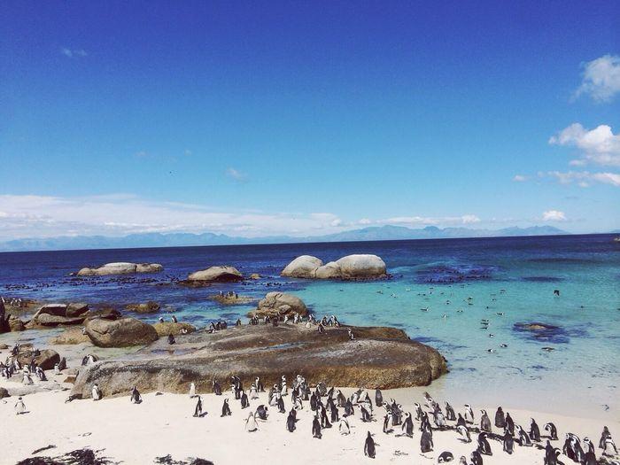 מניאקית מבלה עם החיה האהובה עליי פינגווין