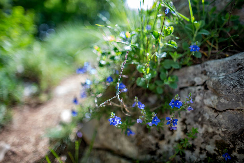 Beauty In Nature Close-up Day Field Flower Flowering Plant Focus On Foreground Fragility Freshness Green Color Growth Land Nature No People Outdoors Plant Purple Selective Focus Sunlight Vulnerability