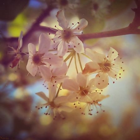Sunrise Relaxing Walking Around Blooming Outdoors Trees Spring Taking Photos Foliage Check This Out Tree Textures And Surfaces Peace And Quiet Edit Softness Gauze Hypnotic