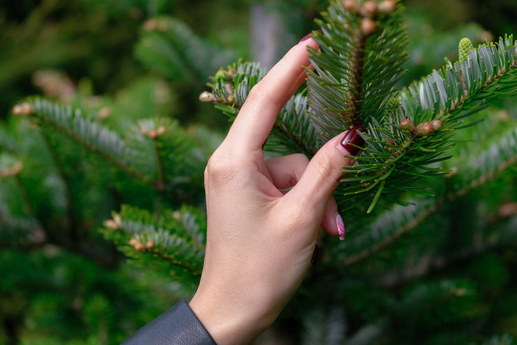 Close-up of woman hand touching tree