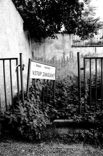 #blackandwhite #Garden #lost Place #overgrown #Prague #ruinous #silence