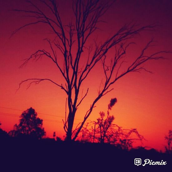 Sunset Nature Tree Beauty In Nature Bare Tree No People Silhouette Landscape Outdoors Sky