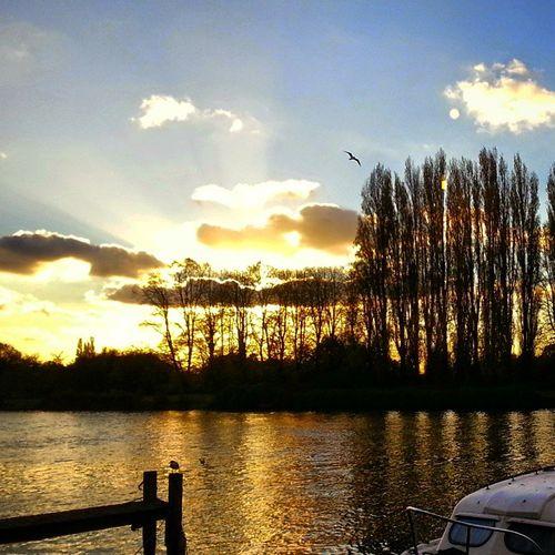London Kingston Thames SunnyEvening Riversidevegetaria
